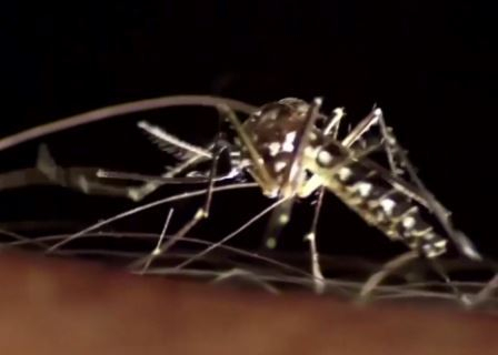 mosquito numbers down _1468442073360.jpg