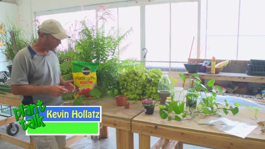 Plant Talk - Propagating Houseplants_20160823162507