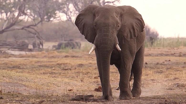 CNN Elephant_1477564505533.jpg