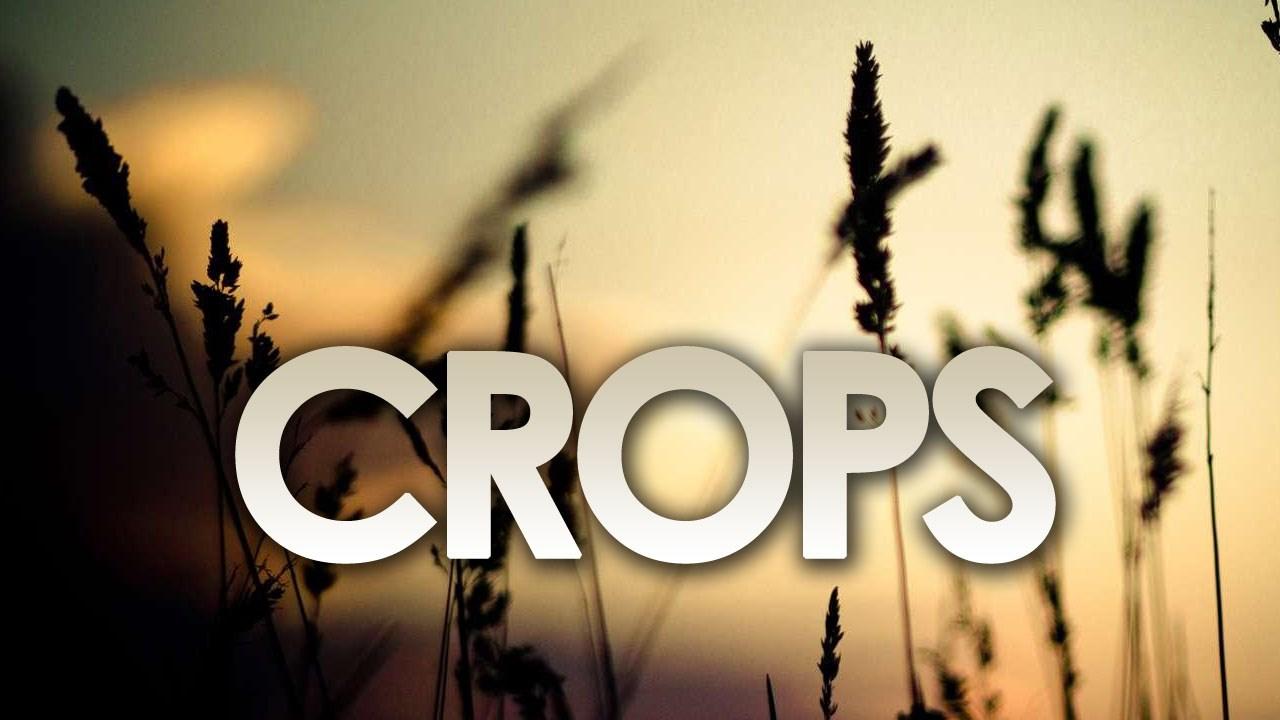 crops_1497983520333.jpg