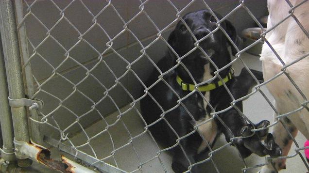 Lab Puppies Hurricane Harvey_1505080811320.jpg