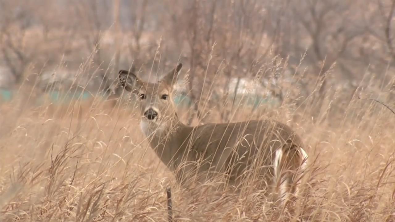 new city hunting ordinance