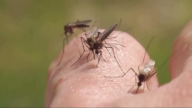 mosquitos_1503612143166.png