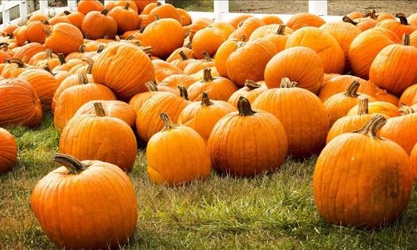 pumpkins_mgn_640x360_71026P00-DTDIG_1536075187397.jpg