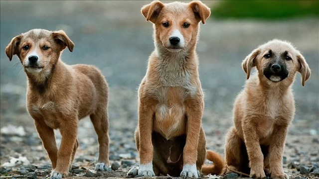 puppies_mgn_640x360_60826P00-OXJGQ_1537542250082.jpg