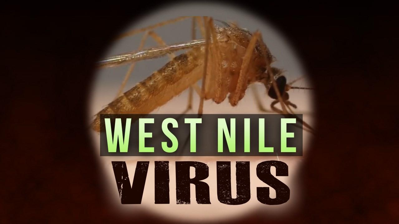 west nile_1537210771786.jpeg.jpg