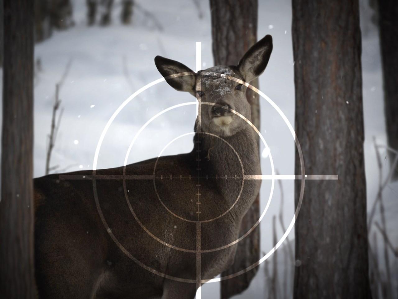hunting_1538589277849.jpeg