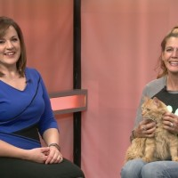 Furry Friday:Meet Brick The Cat