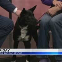Furry_Friday__Meet_Shadow_the_Dog_0_20181228165902