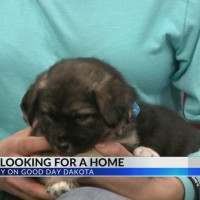 Furry Friday: Pups looking for a home