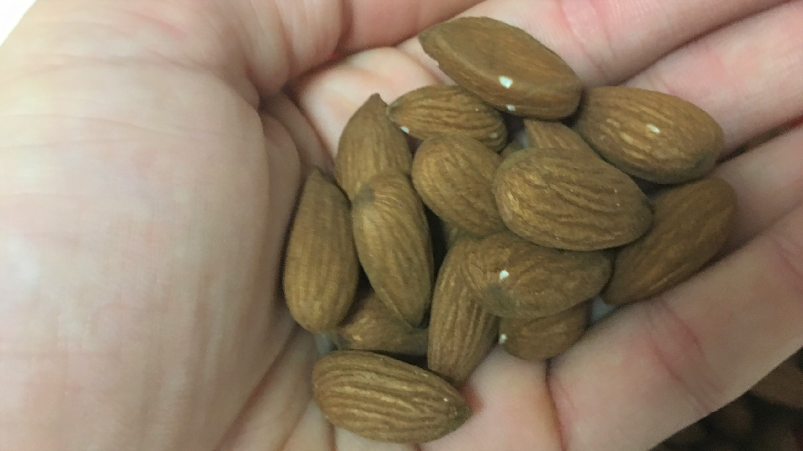 Almonds in hand_1550522140461.JPG.jpg