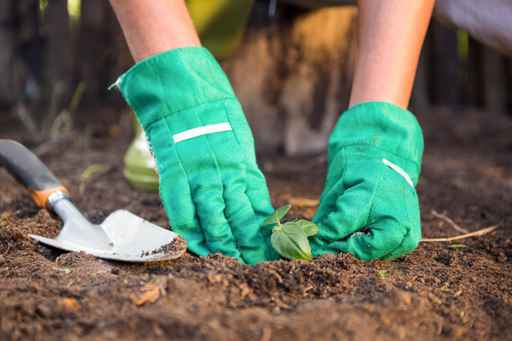 Close-up of gardener planting seedling in dirt at garden_1556568349135