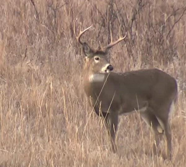 deer_field_1556813547065.jpg