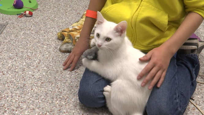 CDHS is having a furry promotion on cats | KX NEWS